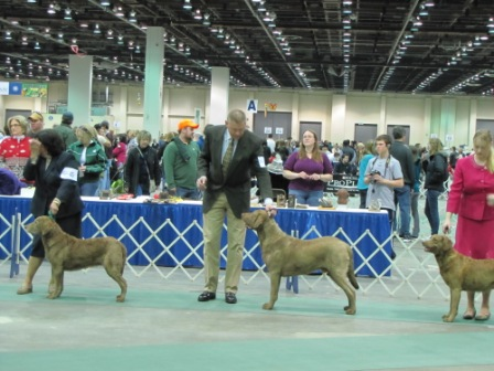 Best of Breed Competition Detroit Kennel Club 2010----Veteran, 10 Years & Over Bitch, Hunting Dog (Thunder), Hunting Bitch