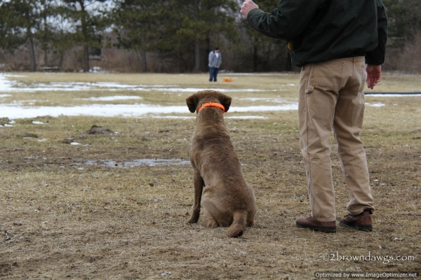 Thunder Watching Mark #4 Which Was Thrown By His Handler Off To The Left