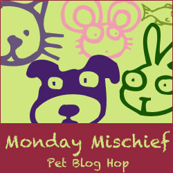 cc8b8-bloghop